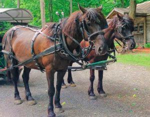 chevaux-sucrerie
