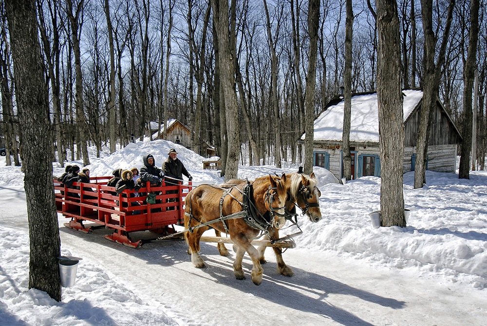 Enjoy a sleigh ride, from the parking to the site or for the fun of it