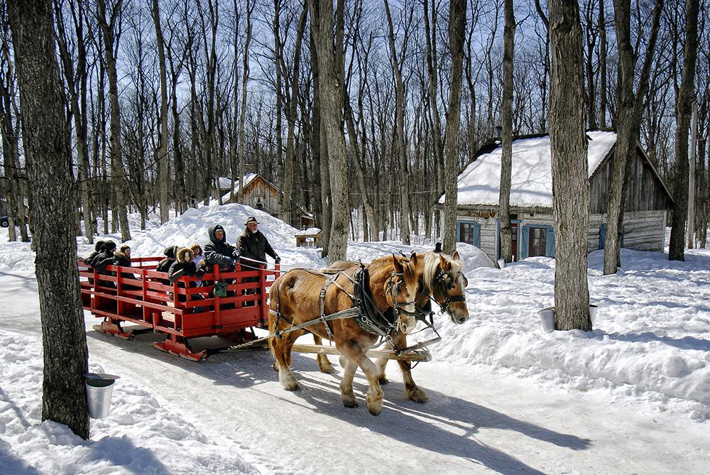 chevaux-cabane-a-sucre